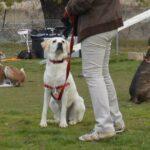 perros-curso-fin-de-semana-educacion-canina-basica-galapagar