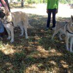 curso-fin-semana-educacion-basica-perros-madrid