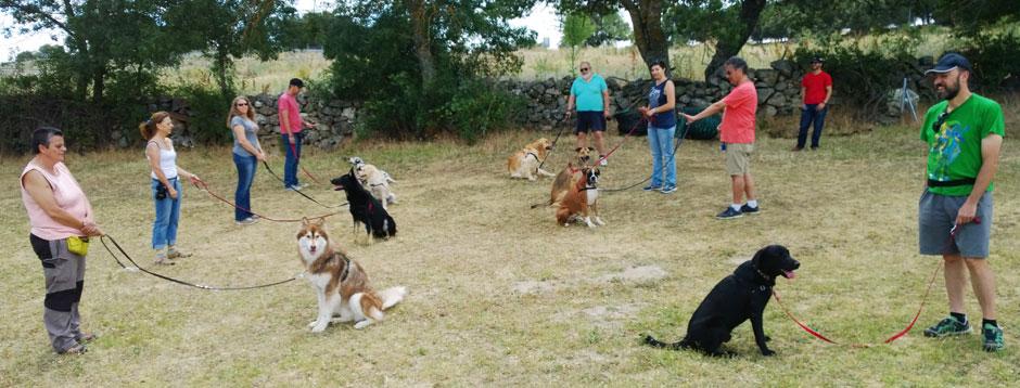 perros-recibiendo-clases-adiestramientocanino-grupo-la-Tejera