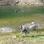 escuela-canina-la-tejera-senderismo-canino-madrid-1