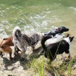 senderismo con perros, escuela canina en madrid