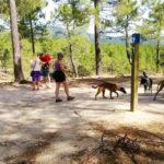 escuela canina en galapagar, cursos adiestramiento