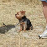 escuela canina, paseos en grupo en sierra de madrid