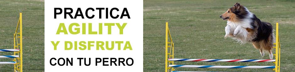 practica agylity con tu perro en Madrid y disfruta. Escuela canina La Tejera