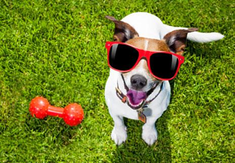 curso-intensivo-obediencia-canina-basica-jul-2017
