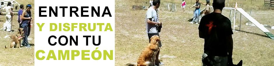 cursos de obediencia canina avanzada en madrid escuela canina la tejera