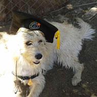 proximo_curso_obediencia_basica_escuela_canina_la_tejera
