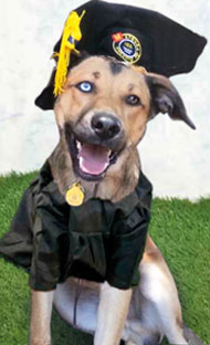 cartel_proximos_cursos-obediencia_canina_latejera
