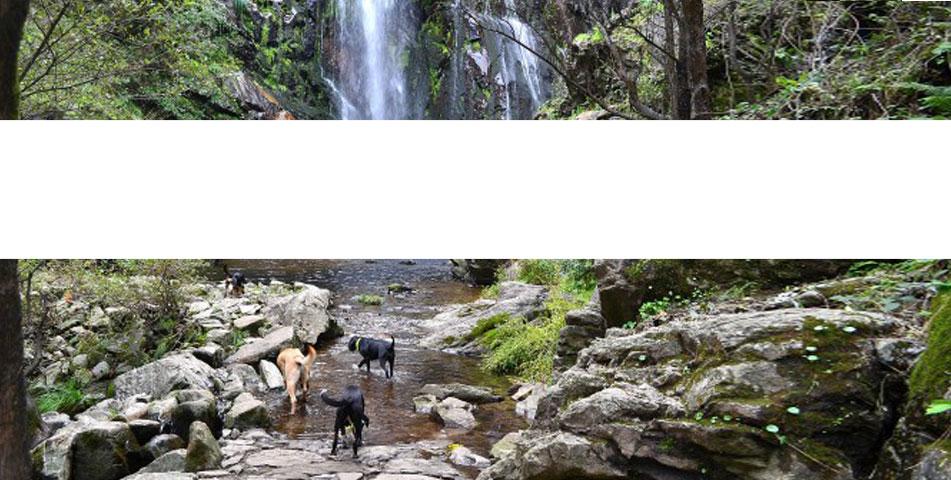 senderismo-canino-latejera-sierra-madrid