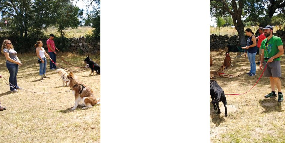 curso-obediencia-básica-canina-madrid