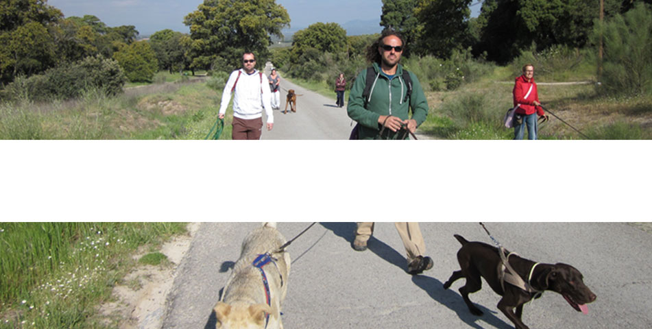 paseo-grupo-sierra-madrid