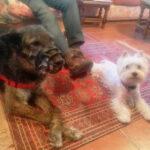 perros-curso-modificacion-conducta-canina-la-tejera