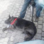 perro-curso-modificacion-conducta-canina-madrid