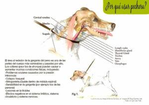collar-ahorque-perro