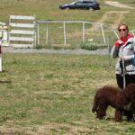 clases-adiestramiento-perros-galapagar