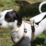 perro-graduado-curso-adiestramiento-canino-latejera