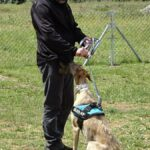 galgo-curso-adiestramiento-canino-la-tejera-febrero