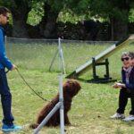 perros-diplomados-curso-intensivo-latejera