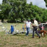 curso-obediencia-canina-galapaga-la-tejera