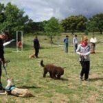 clases-adiestramiento-perros-la-tejera-galapagar