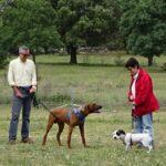 perros-diplomados-curso-intensivo-tejera