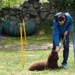 clases-perros-intensivas-latejera