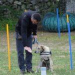 obediencia-canina-curso-la-tejera-2017
