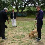 clases-fin-semana-adiestrar-perros-la-tejera