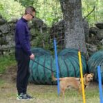 curso-intensivo-fin-de-semana-obediencia-canina