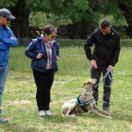 cursos-intensivos-latejera-adiestrador-perros
