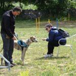 perro-curso-adiestramiento-la-tejera