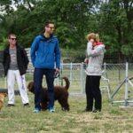 clases-fin-de-semana-adiestramiento-perros-latejera