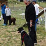 clase-intensiva-escuela-perros-la-tejera
