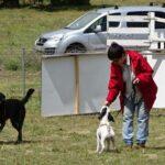 curso-adiestramiento-canino-la-tejera