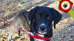 KEELA graduado curso de obediencia básica canina intensivo en Escuela Canina La Tejera