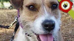 KENIA graduado curso de obediencia básica canina intensivo en Escuela Canina La Tejera