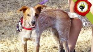 MAHOU graduado curso de obediencia básica canina intensivo en Escuela Canina La Tejera
