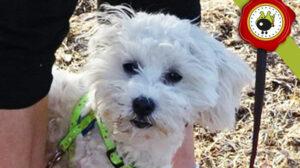 PUNKY graduado curso de obediencia básica canina intensivo en Escuela Canina La Tejera