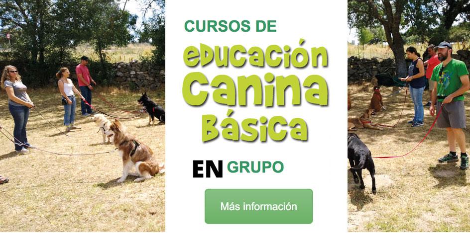 cursos-aducacion-canina-basica-en-grupo-la-tejera