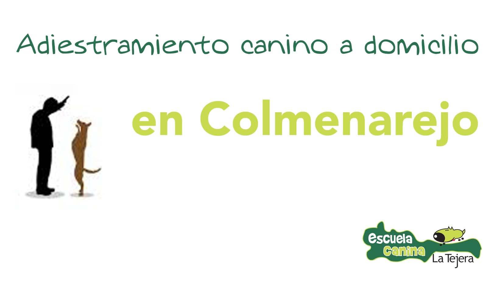 adiestramiento_domicilio_colmenarejo