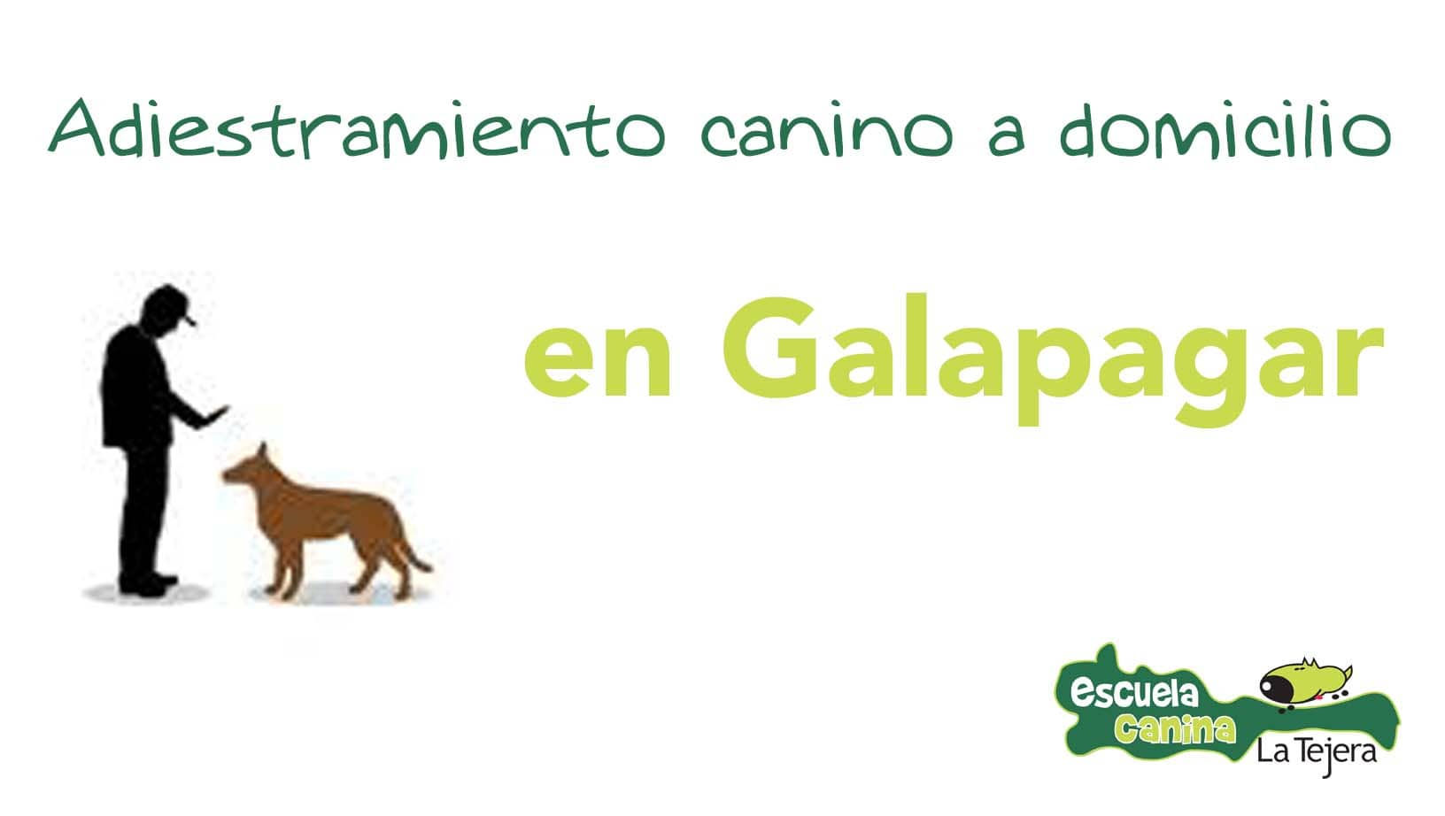 adiestramiento_domicilio_galapagar