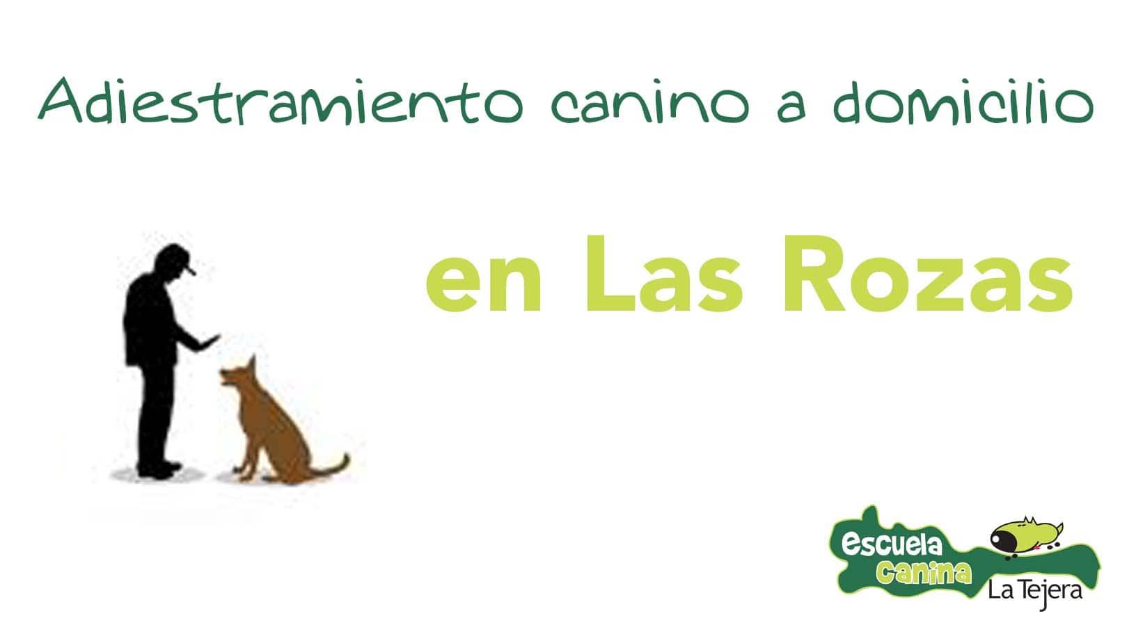 adiestramiento_domicilio_las_rozas