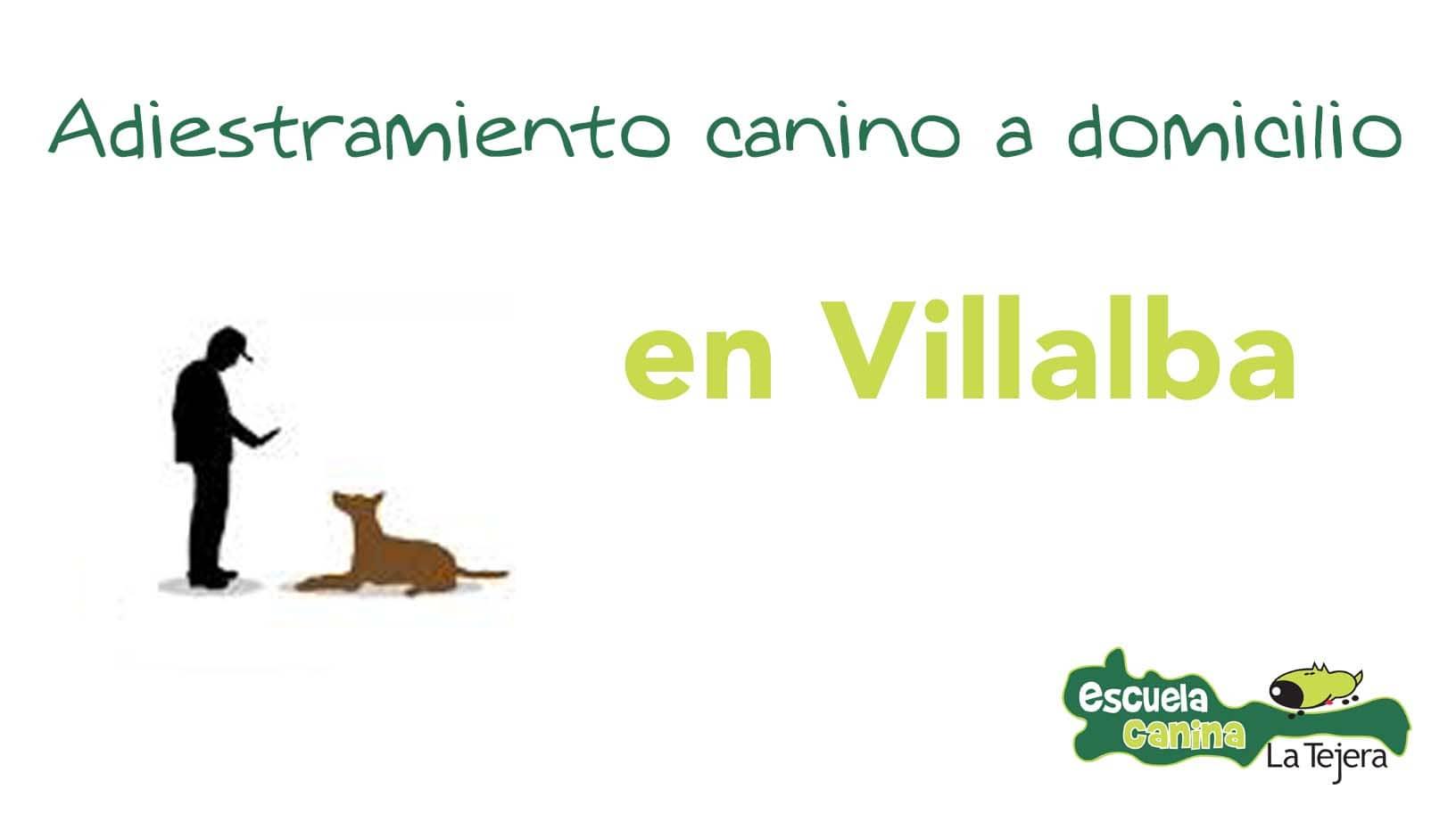 adiestramiento_domicilio_villalba