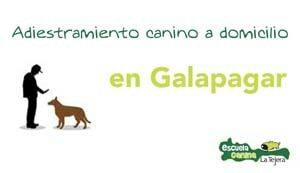 galapagar_adiestramiento_domicilio