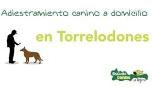 torrelodones_adiestramiento_canino_domiclio