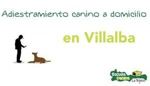 adiestramiento-canino-domicilio-villalba