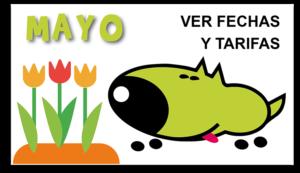 curso-intensivo-mayo-obediencia-canina