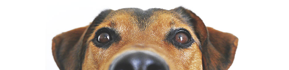 equipo-escuela-canina-la-tejera