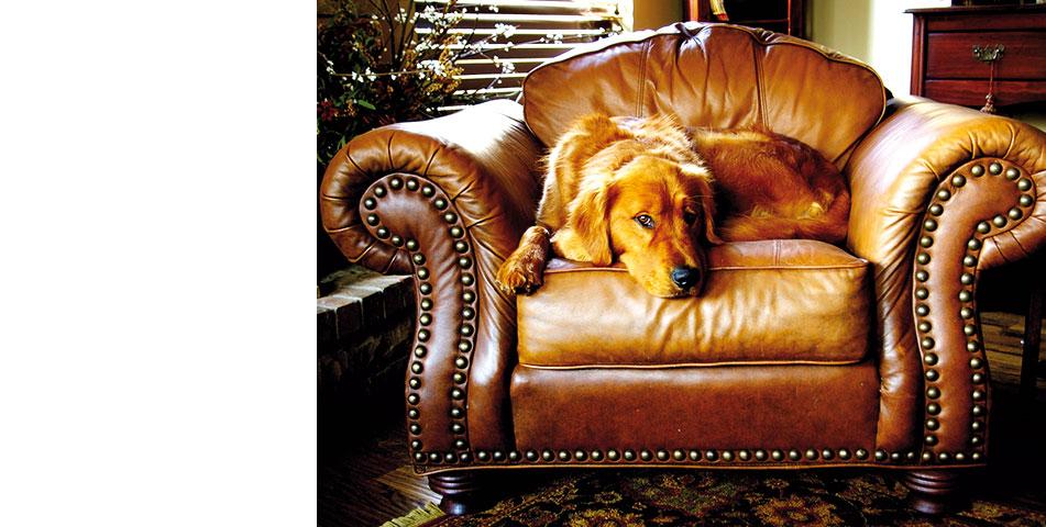 fondo-perro-obediente