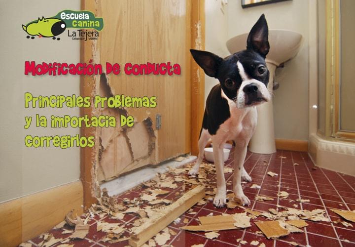 modificacion-conducta-perros